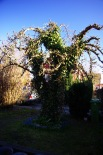 Päronträdet