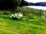bild-blommor sikar