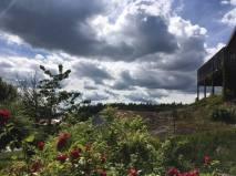 Utsikt från mormors hus