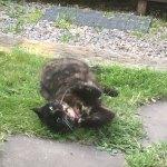 Katten Majsan ärmodell
