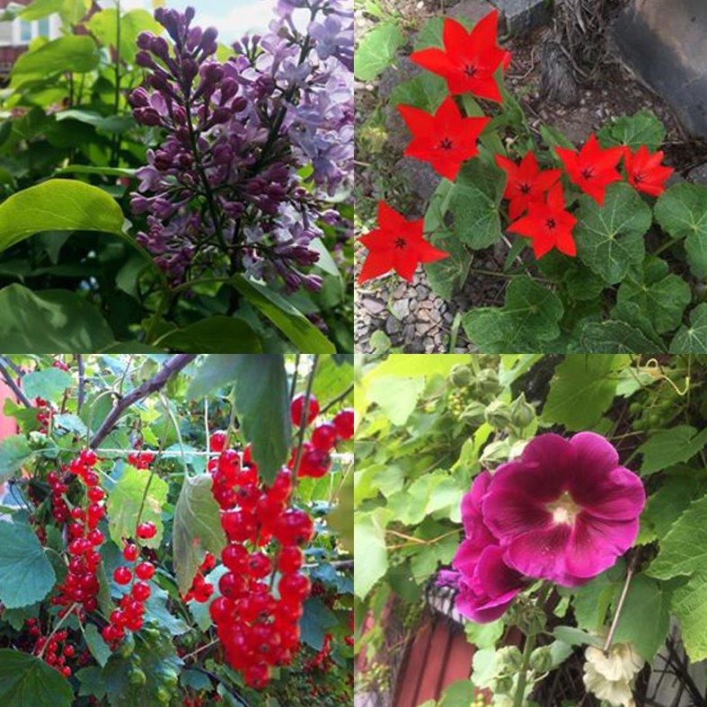 blomma & vinbär